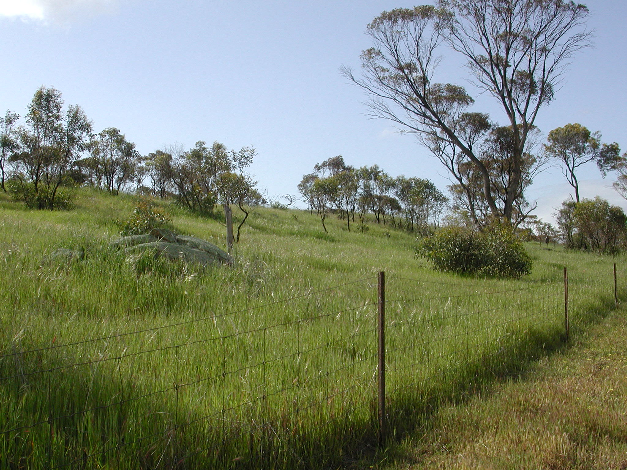 A wire fenceline with regenerating woodland on one side and short grass on the other