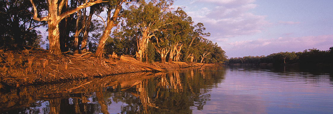 River at dusk showing gum trees along the river bank reflected in the water