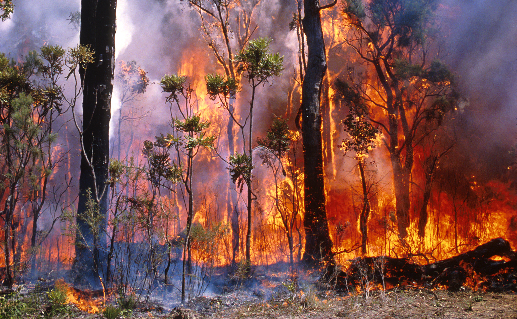 Fire burning through bushland in Western Australia.