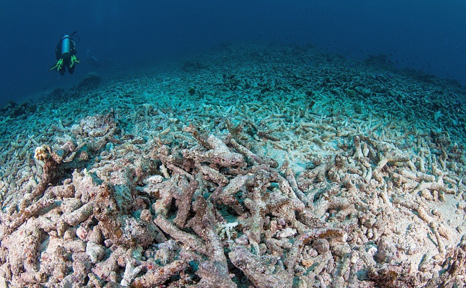 This Acropora field in Fiji was exposed to multiple impacts including a crown-of-thorns outbreak and cyclone damage.
