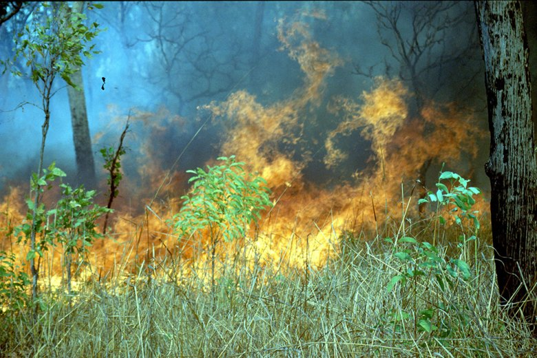 Grass fire in a lightly wooded area