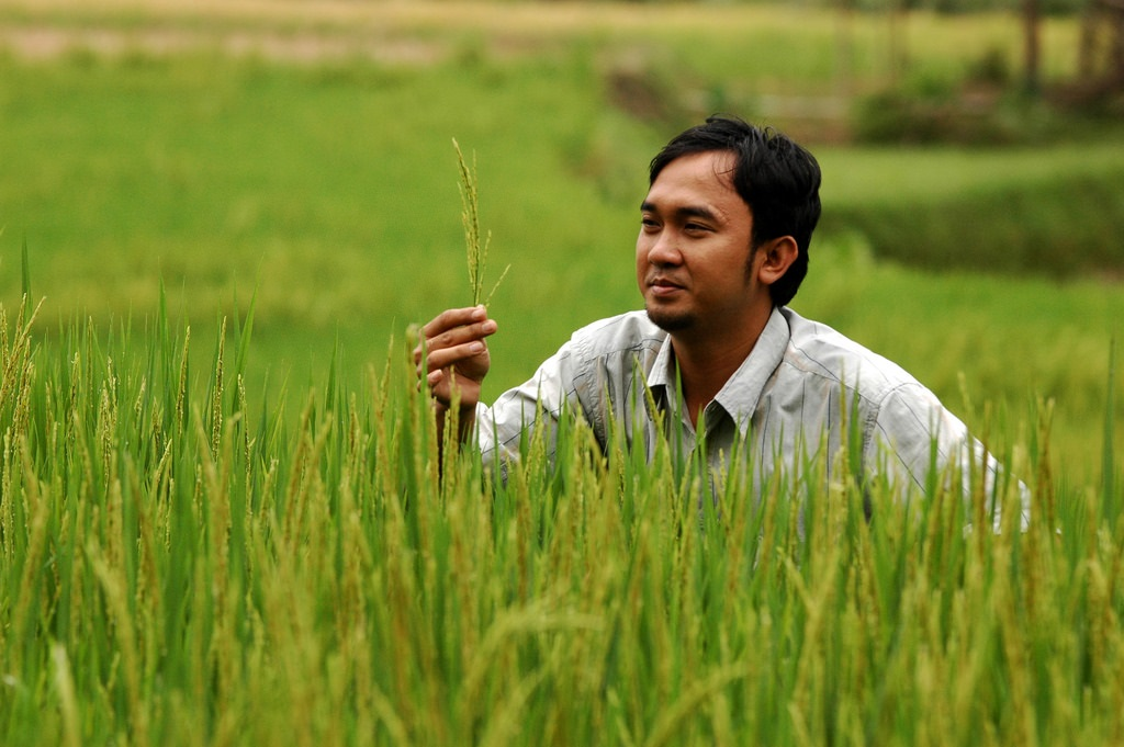 Indonesian man standning in organic rice field in Indonesia, Jakarta.