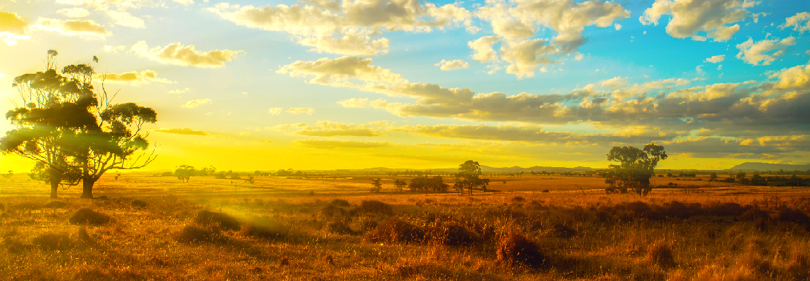 Australian rural landscape in golden sunlight of sunset