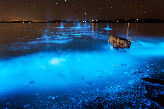 Shows the seashore at night glowing bright blue during a bloom of bioluminescent algae.