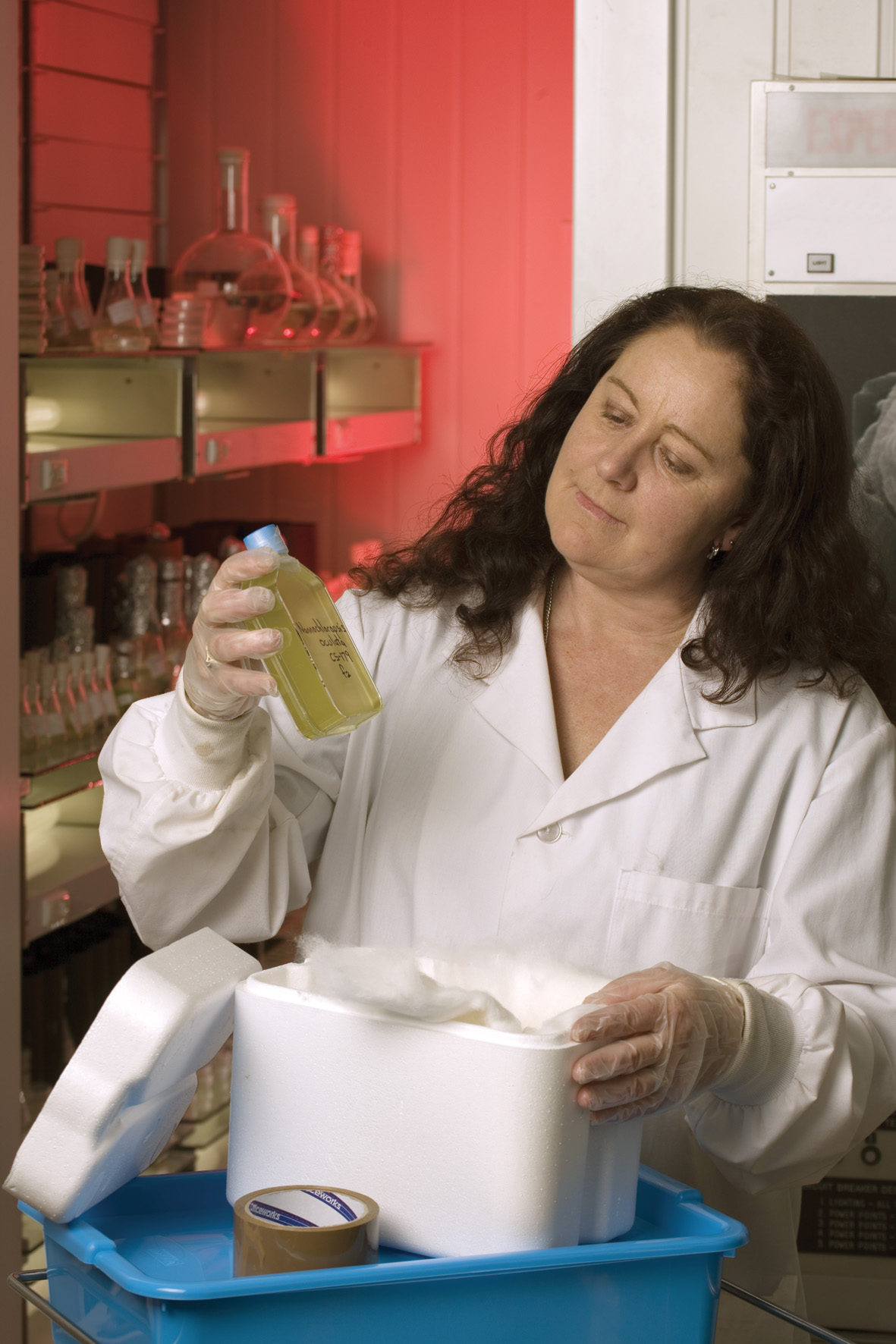 Cathy Johnston inspects a bottle of algae culture.