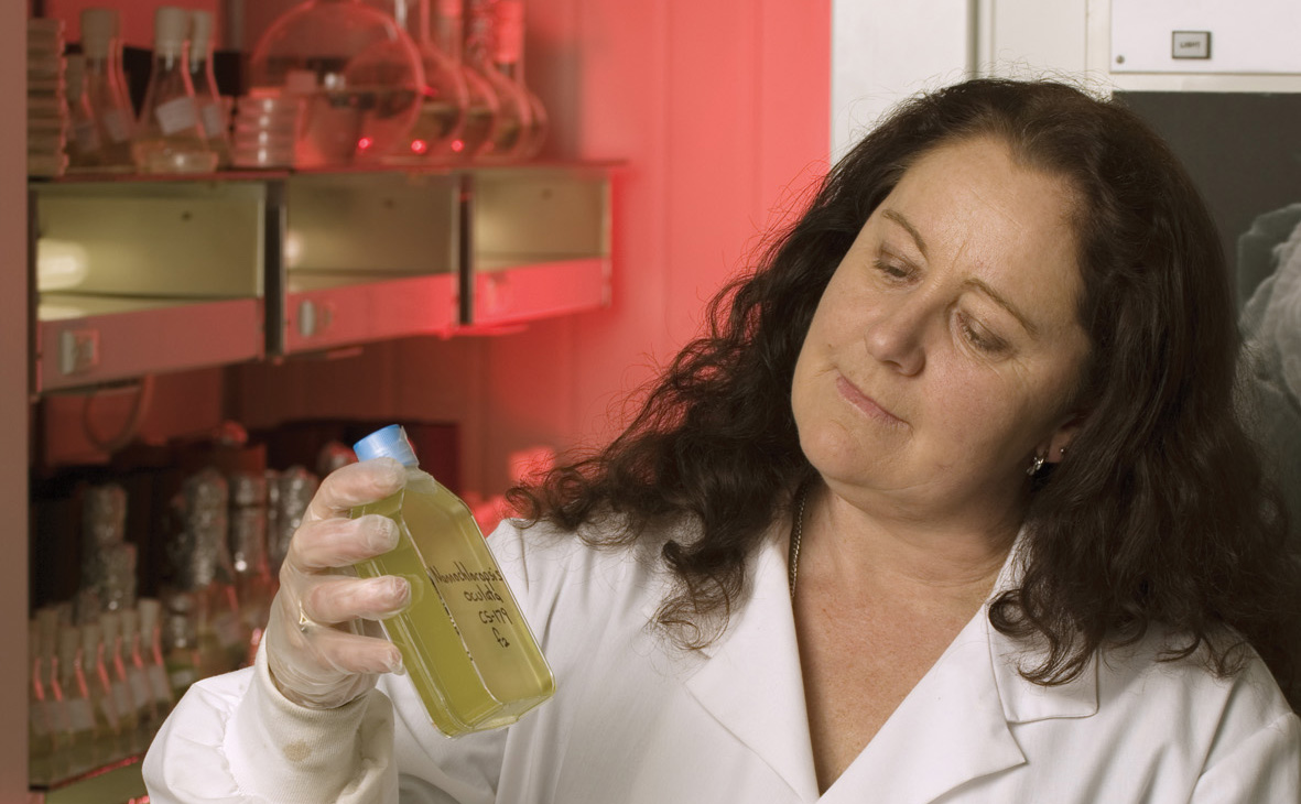 Cathy Johnston inspects an algae culture in a bottle.