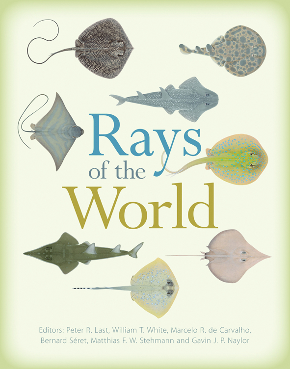 The words 'Rays of the World' are surrounded by pictures of different stingrays and other rays
