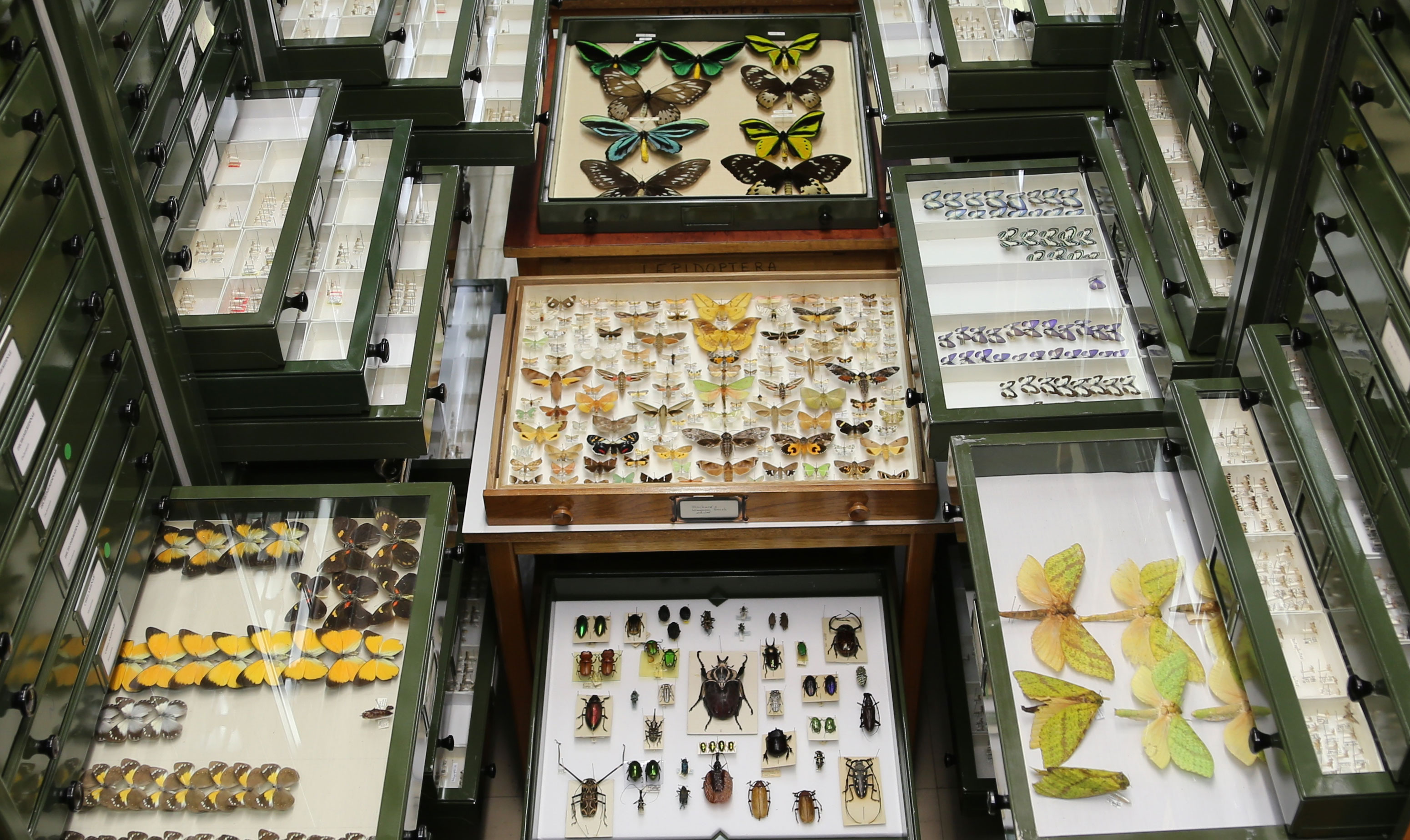Cabinet drawers filled with various insects opened for display