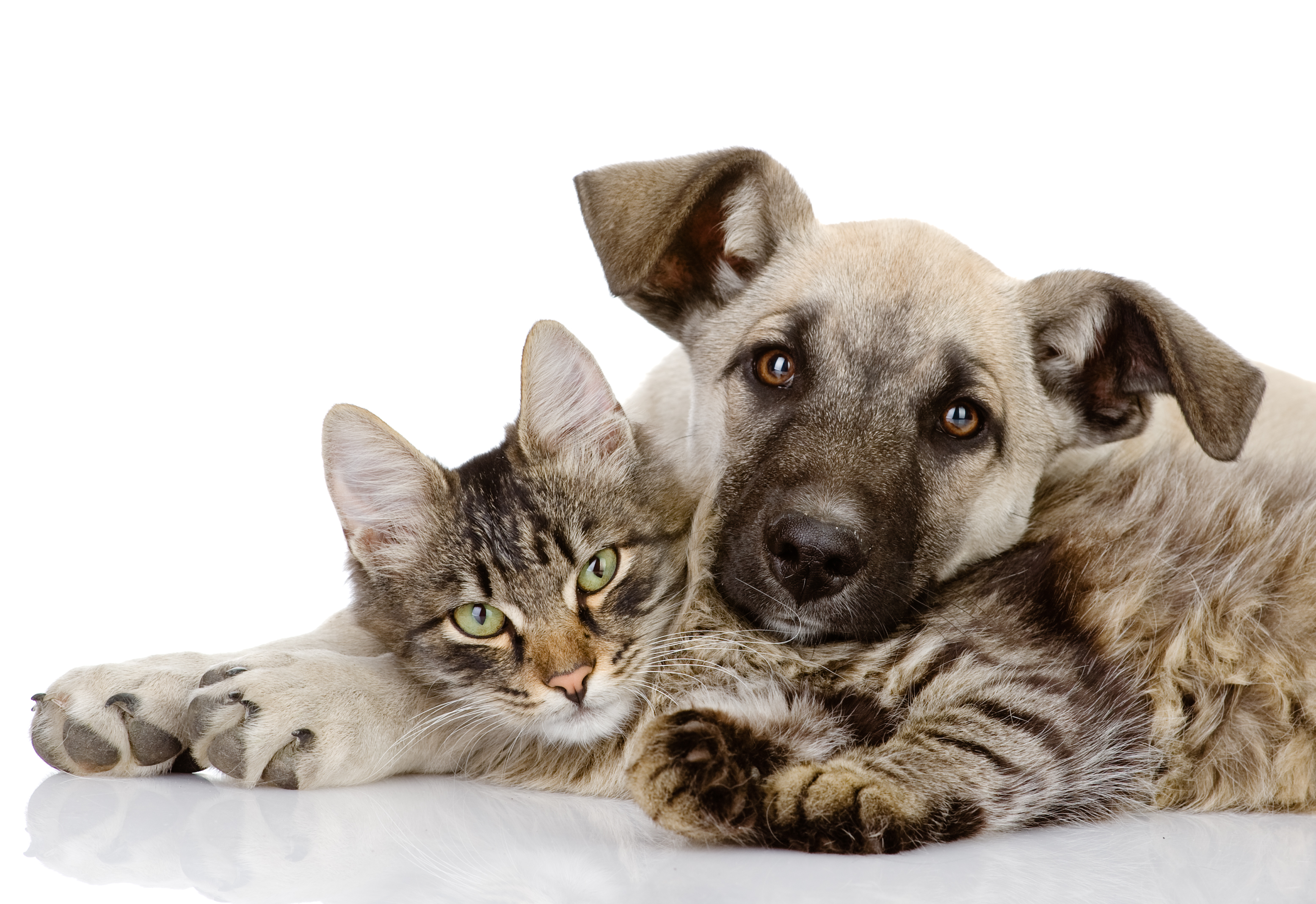 A cat and dog having a cuddle