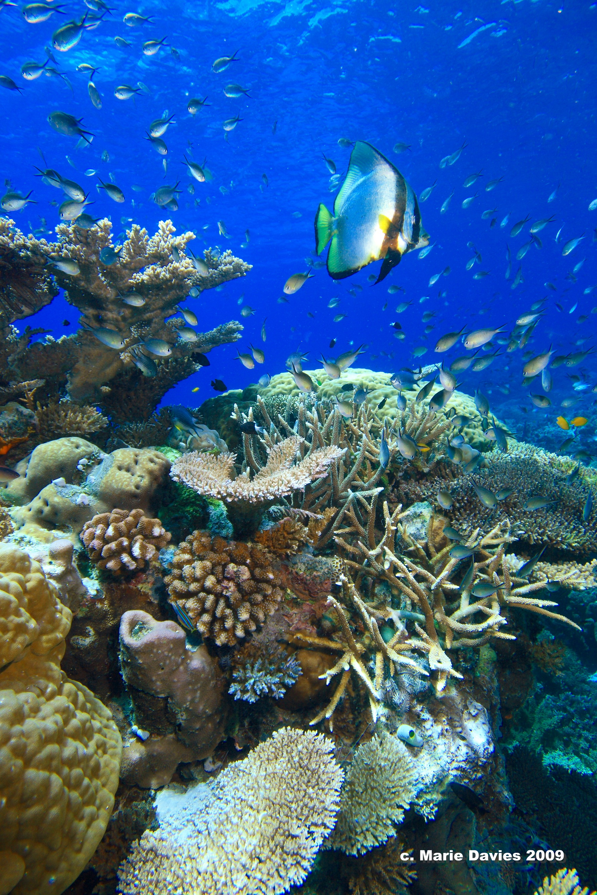 Marine life on the Great Barrier Reef.