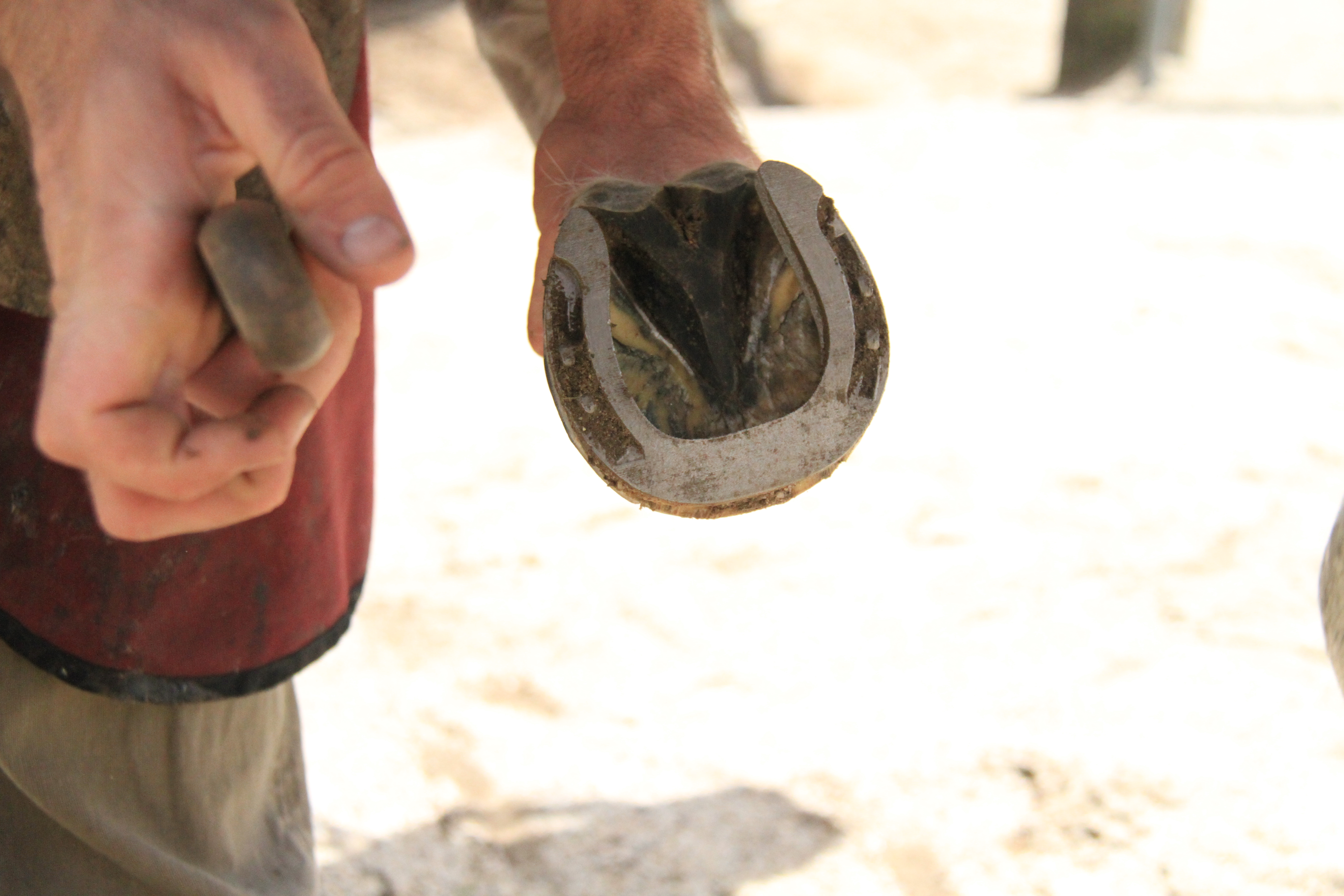 Horse hoof with 3D printed shoes
