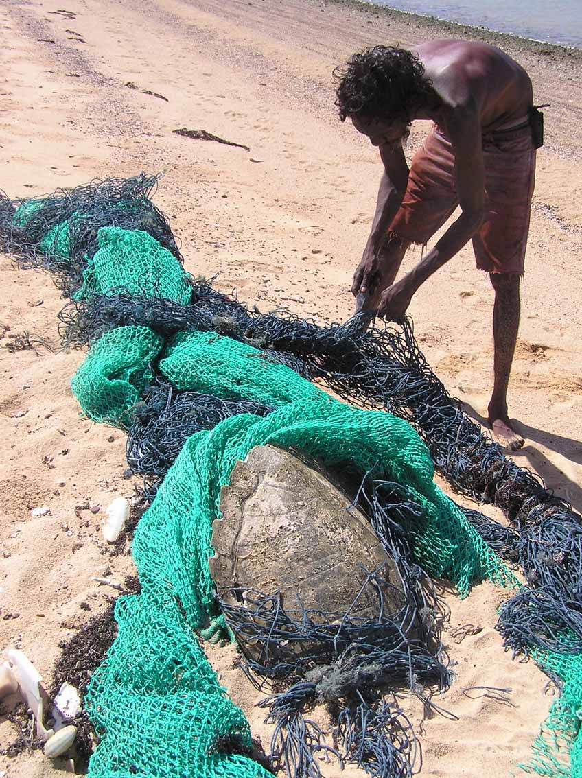 An Indigenous ranger finds a ghostnet with a turtle entangled.
