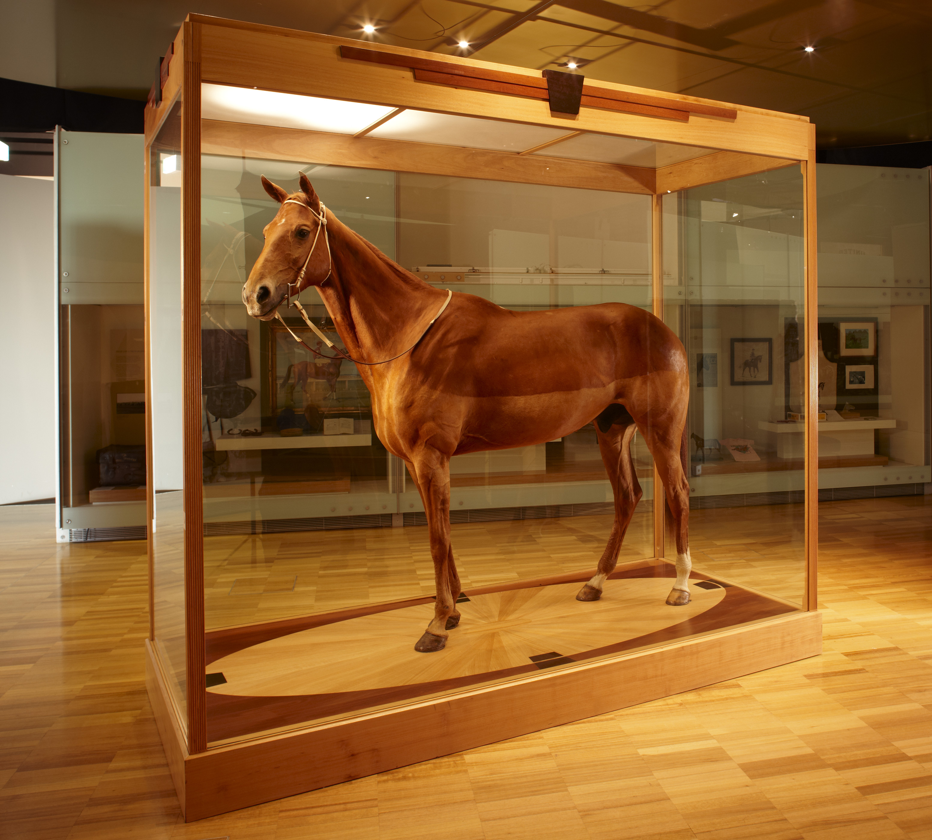 Phar Lap's hide on display in the Melbourne Museum