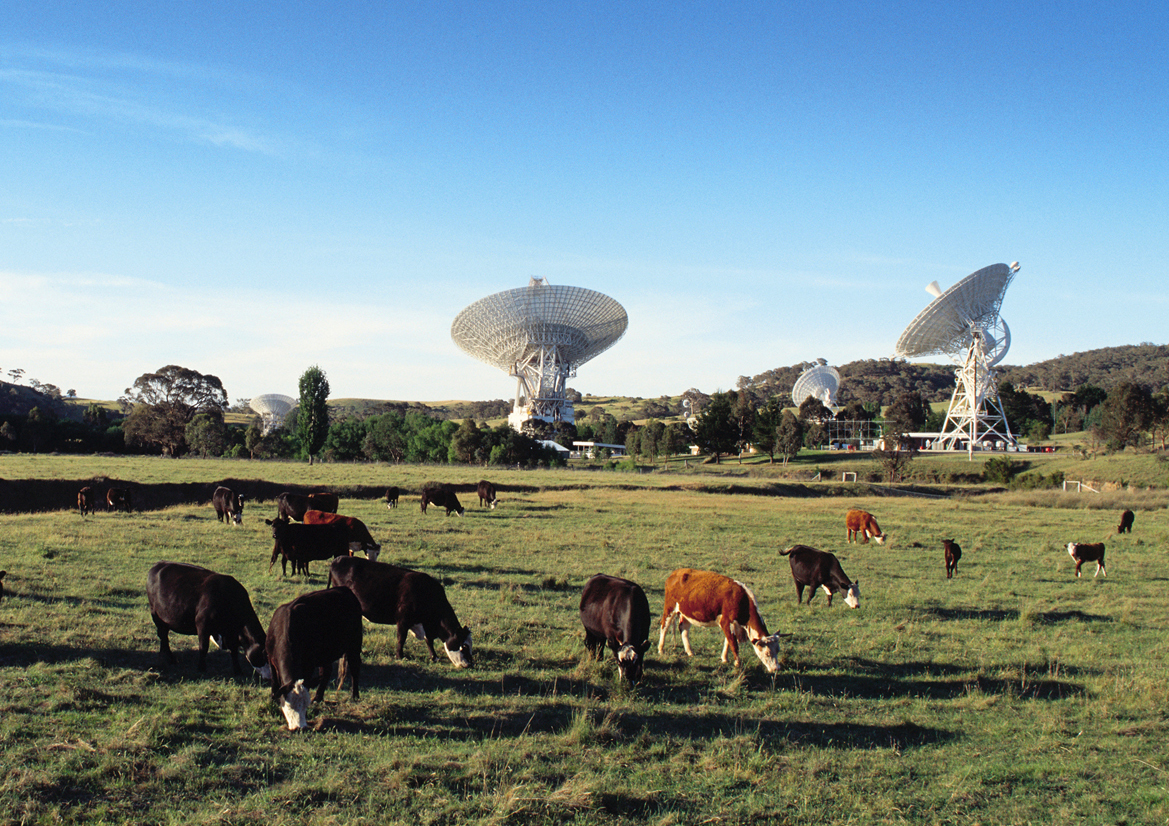 Cows grazing in front of the Canberra Deep Space Communication Complex.