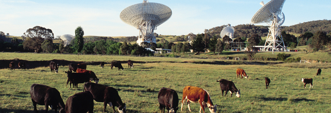 View across a paddock with cows at The Canberra Deep Space Communication Complex