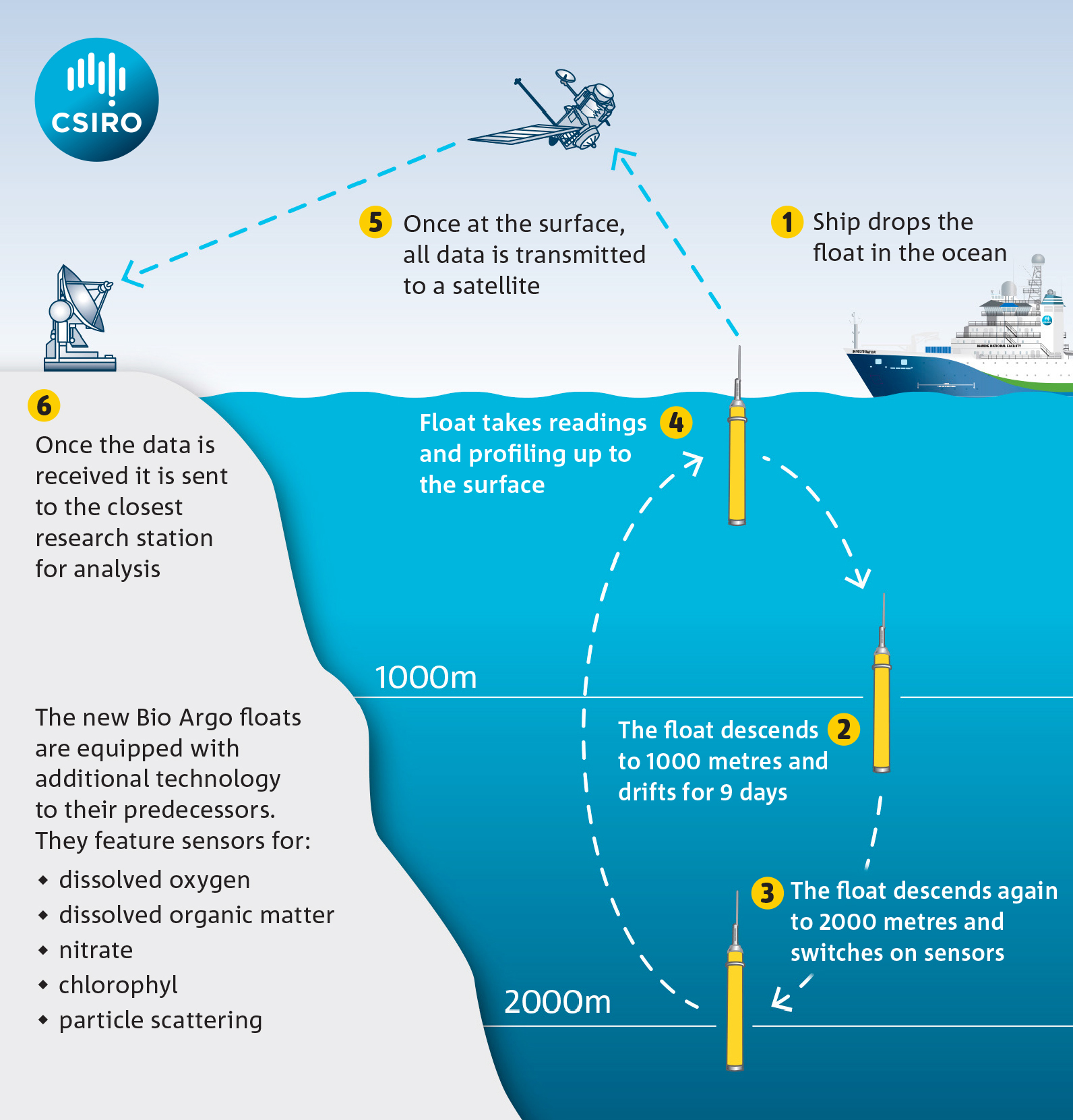 An infographic on how data is collected from an Argo float.