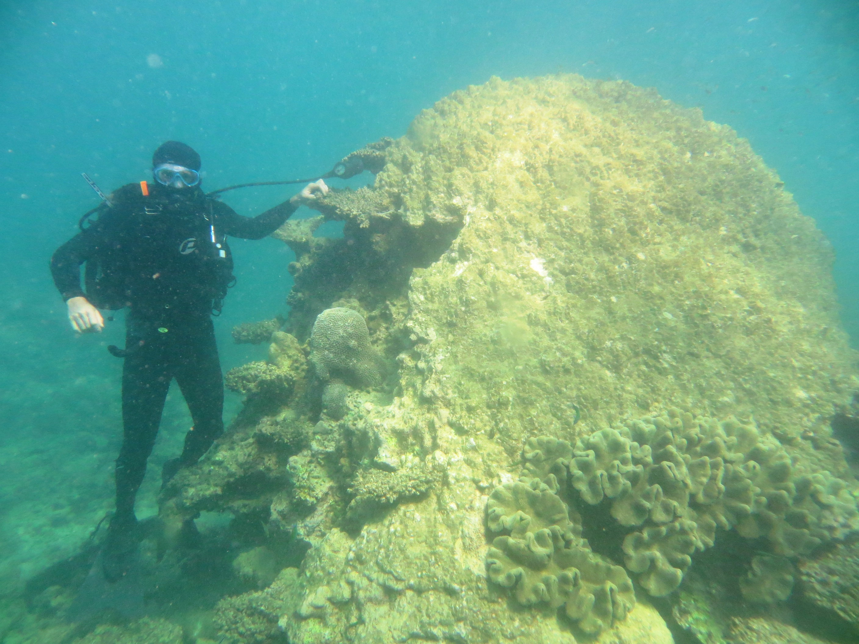 Dr Tim Langlois, scuba diving, with a 400 year old Porites coral head that has succumbed to coral bleaching.