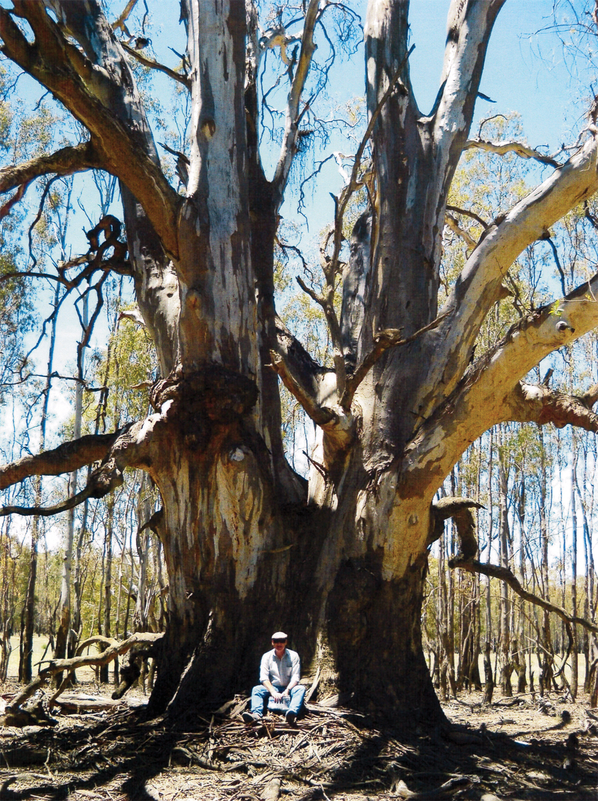 Dr Matthew Colloff sitting at the base of a veteran river red gum