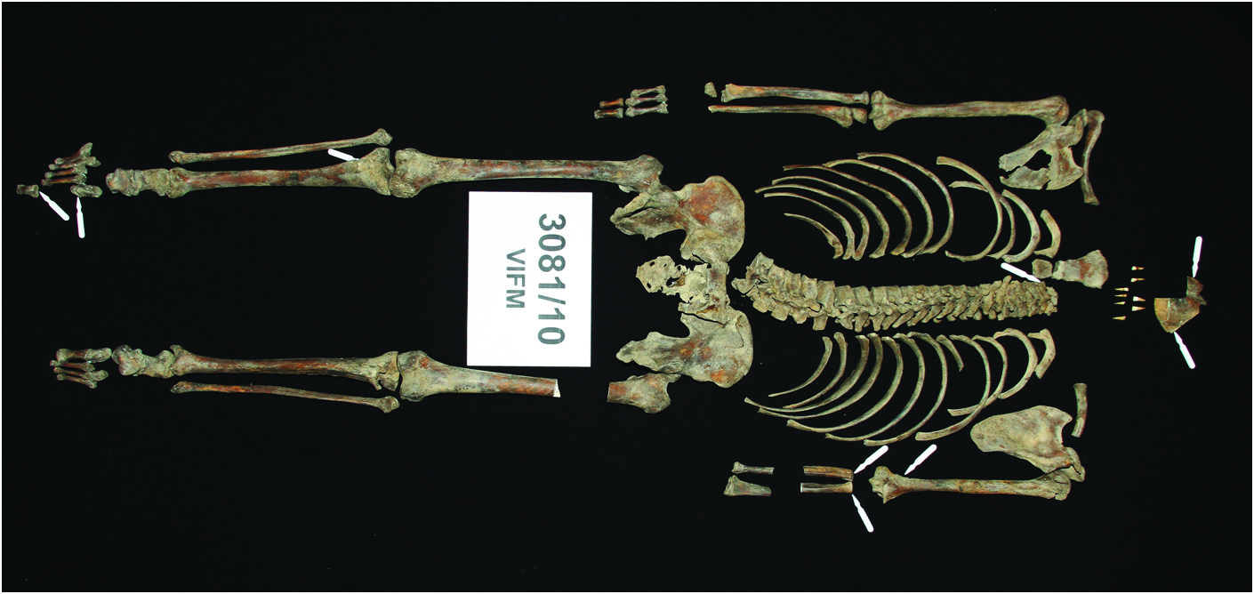 Ned Kelly's skeletal remains