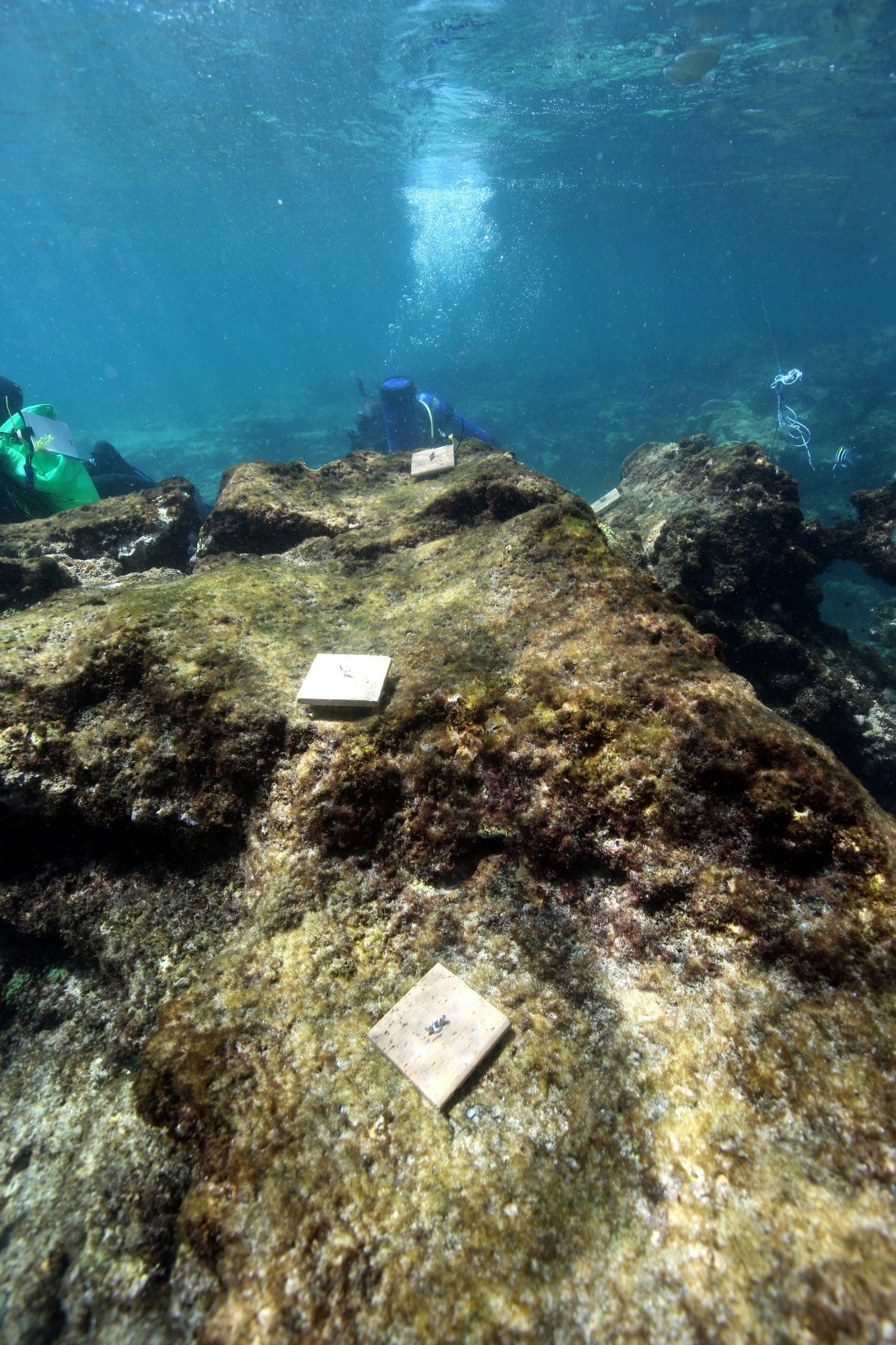 Underwater image of terracotta tiles that have been deployed onto disturbed reefs