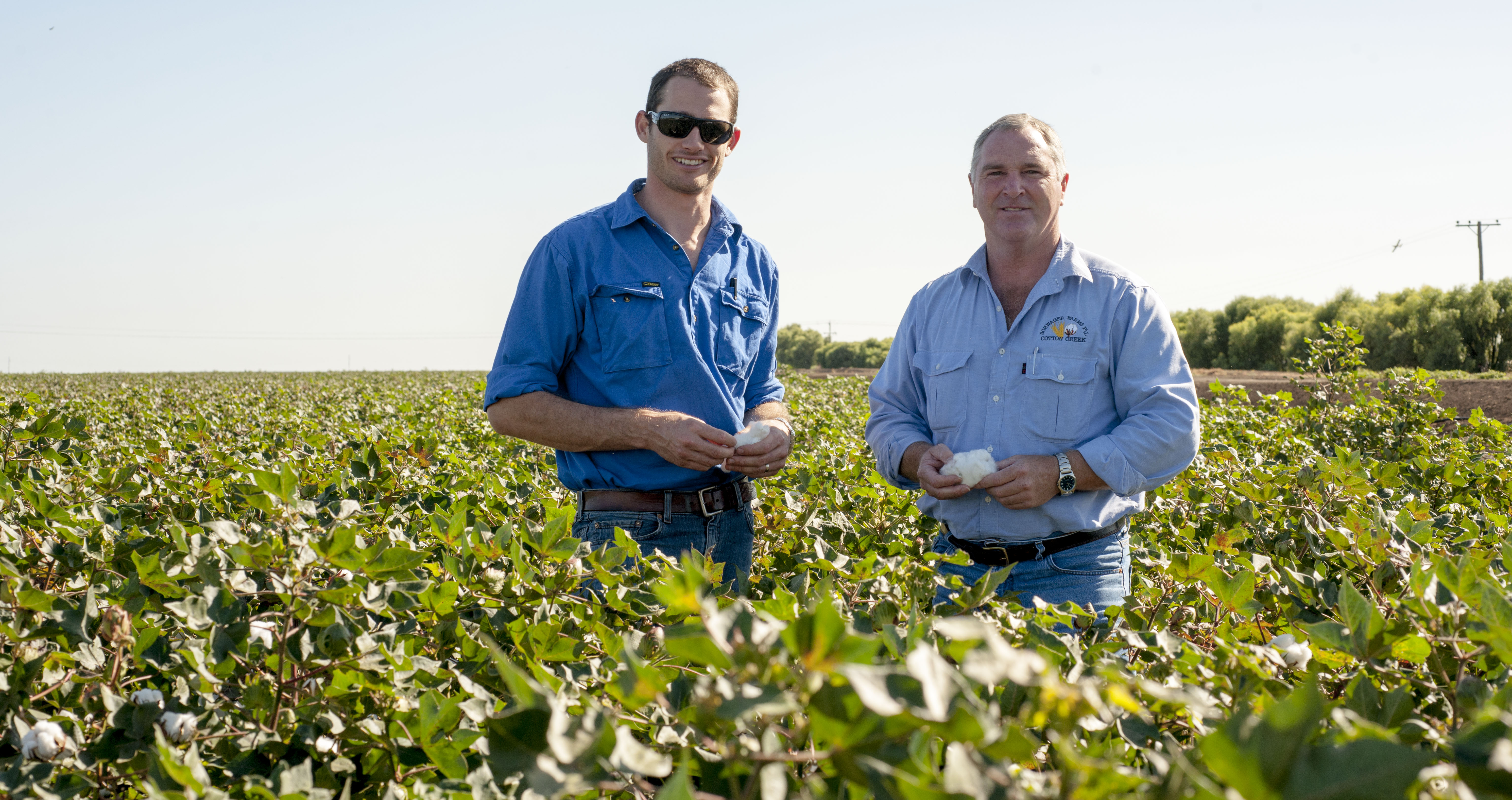 Two people standing in a cotton field holding a cotton boll.