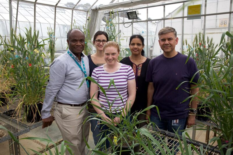 Five memebers of the cereal rust disease prevention team standing among potted plants in a glasshouse.