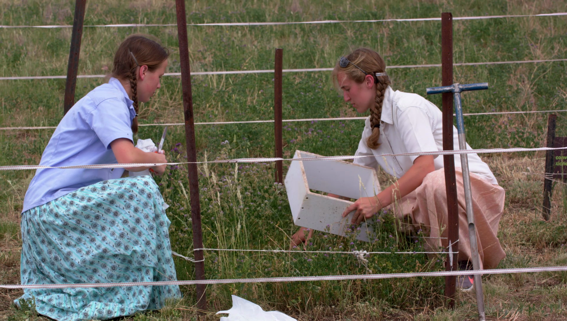 Tiarra Meier and Anne Zimmerman working in the field on a property in Elsmore, NSW.