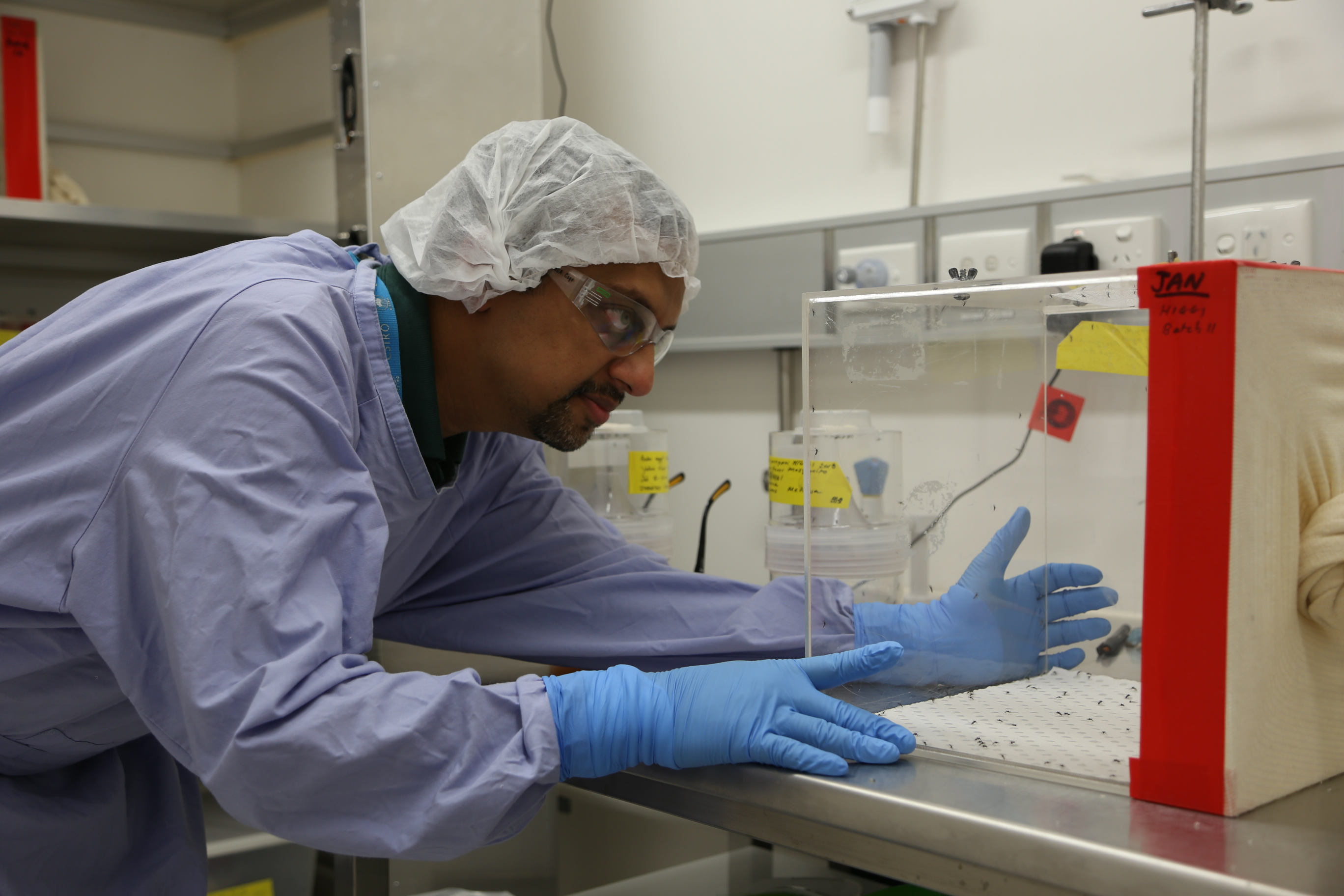 Dr Prasad Paradkar working on Zika in the laboratory.