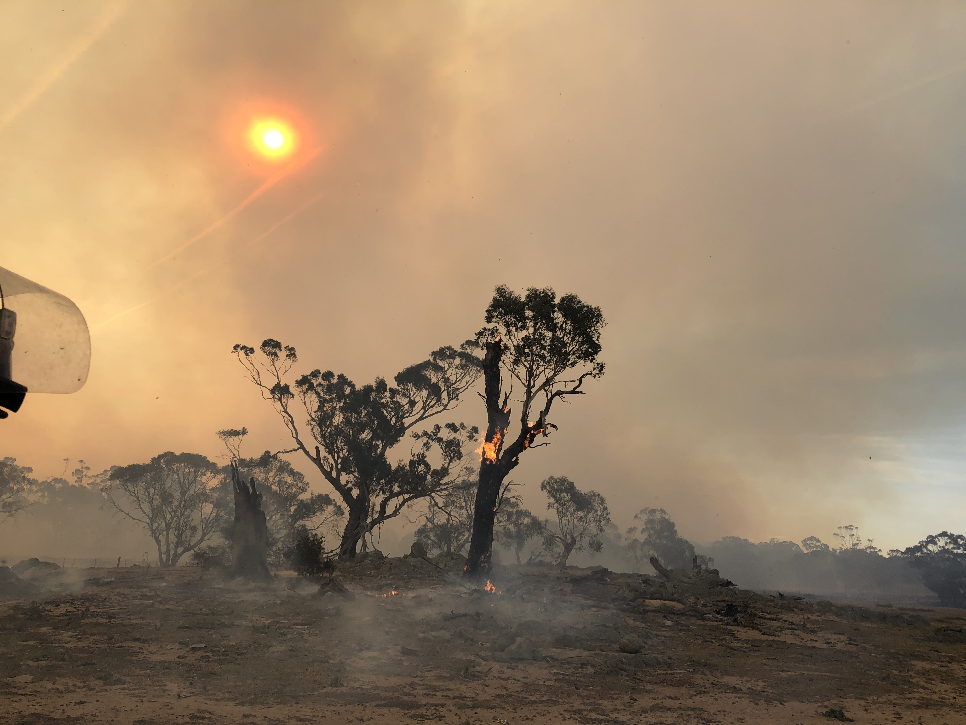 Aftermath of a bushfire showing blackend ground and a large tree with burning trunk still with some leafy branches at the very top and the sun glowing red through the smokey sky.