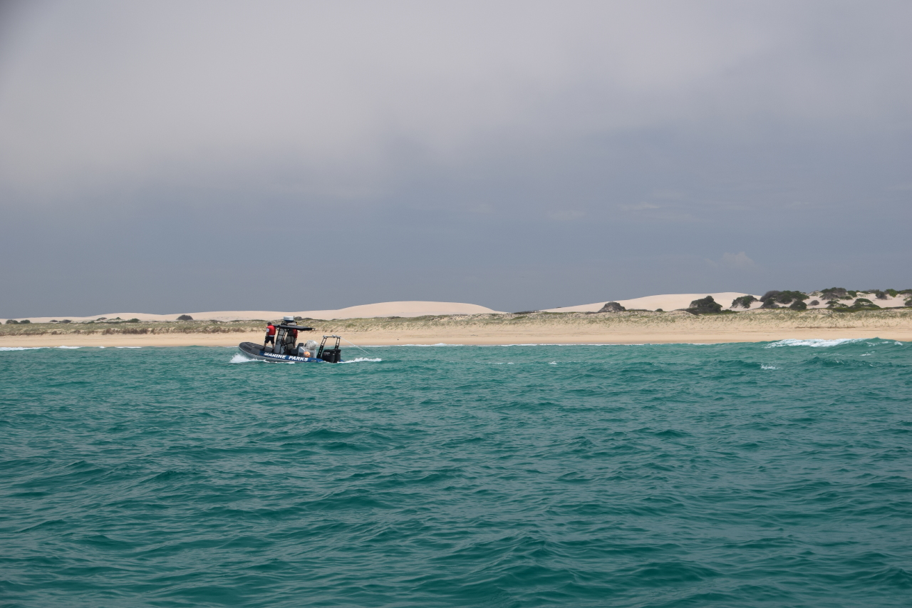 Researchers  in a boat search for juvenile white sharks off the coast of Port Stephens, NSW