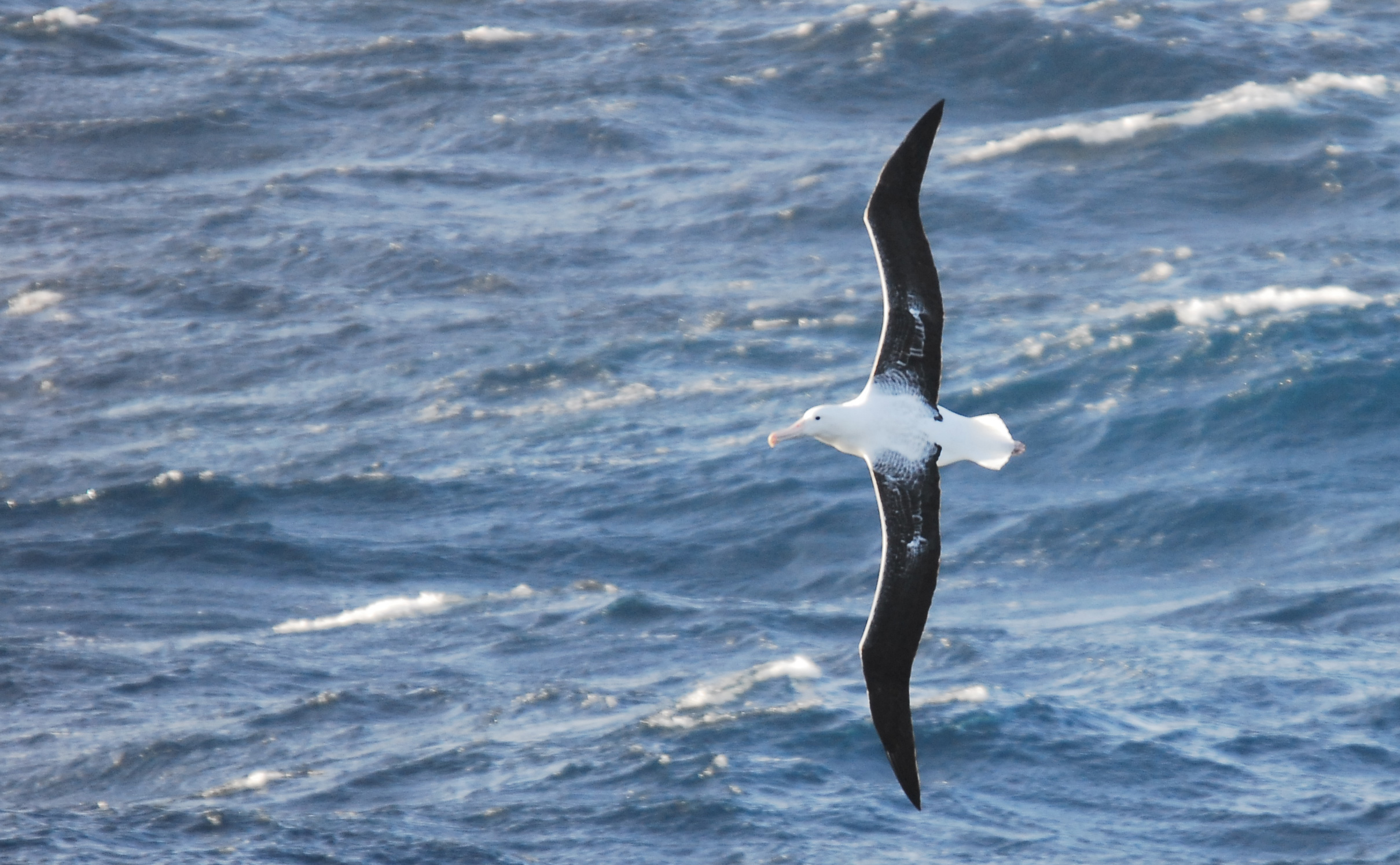 Bird flying over the ocean