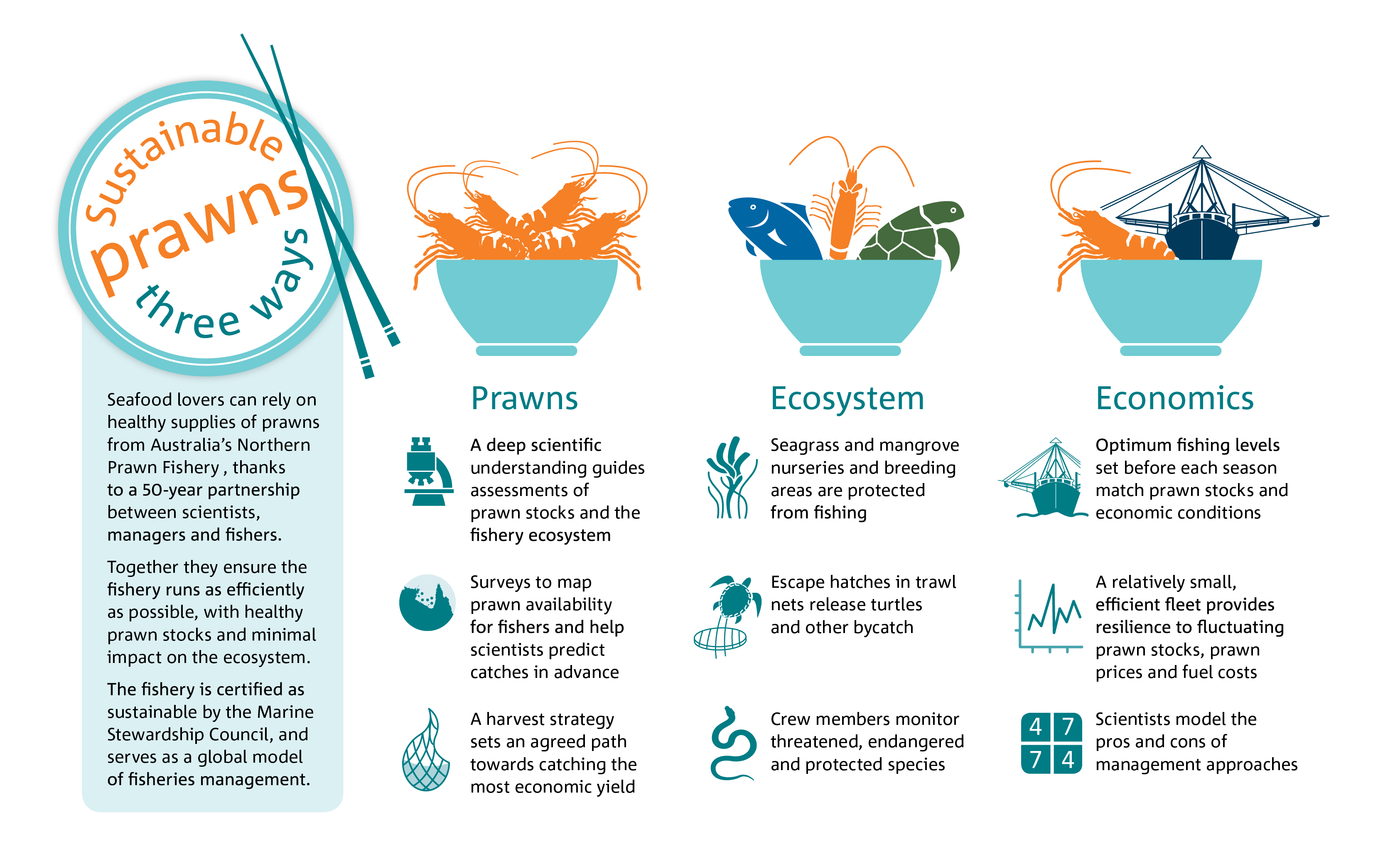 Infographic: sustainable prawns in the Northern Prawn Fishery