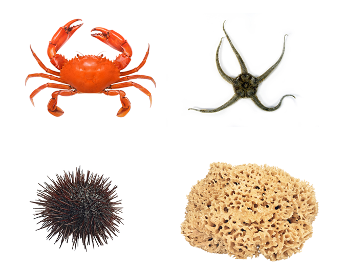 sea floor organisms - crab, sponge, urchin, brittle star