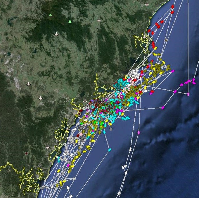 Satellite image showing movements of white sharks from satellite  tags