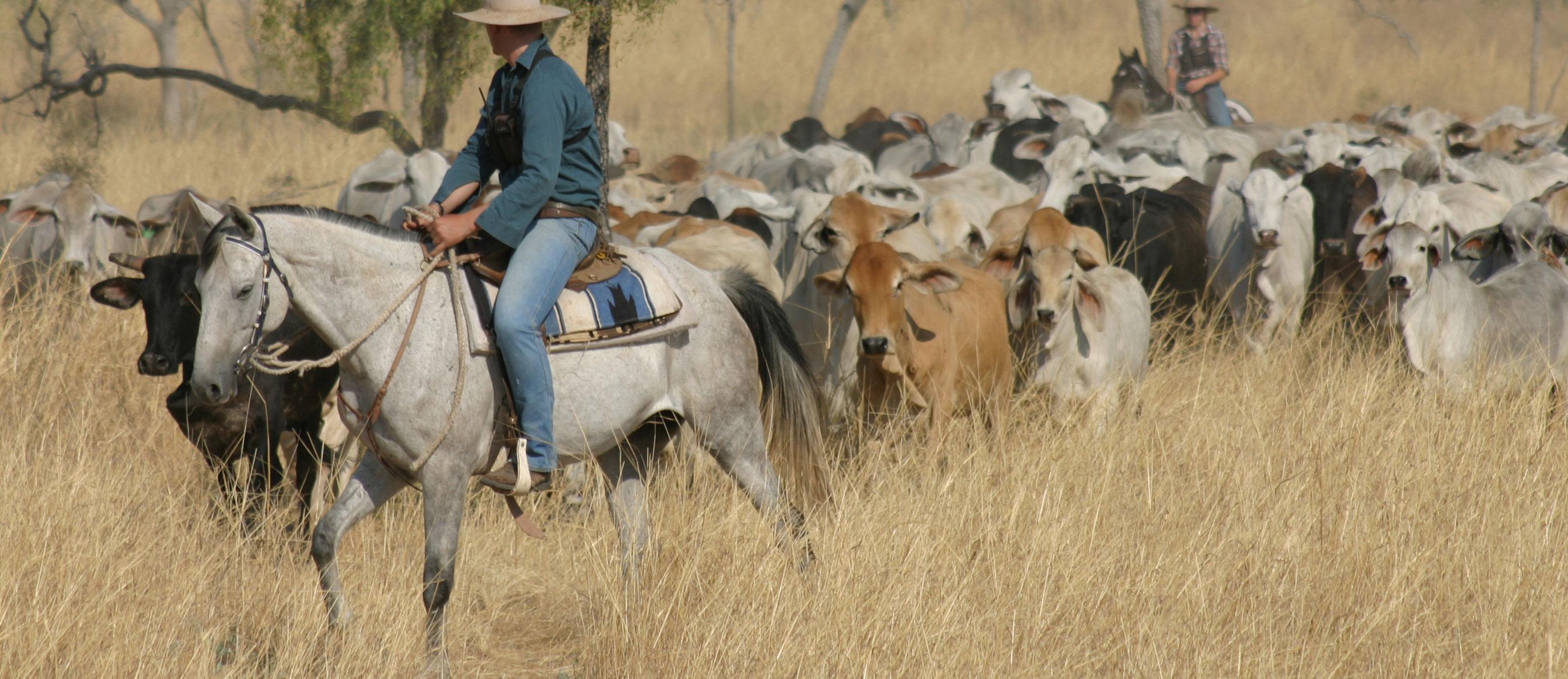 Developing northern australia csiro malvernweather Image collections